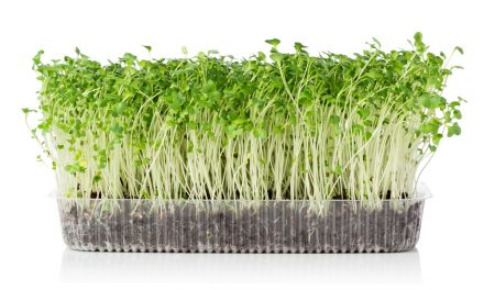 More About Microgreens